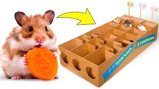 New Hamster Race From Cardboard For Three Cute Hamsters 🐹🥇