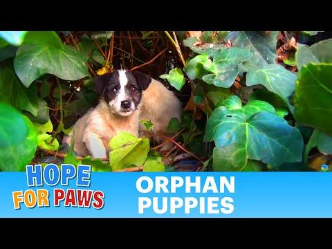 野良犬の子犬たちを保護する映像にほっこり♪