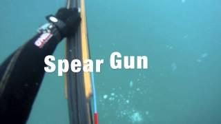 20 lbs. Yellowtail - Spearfishing Catalina Island