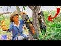 MẤT CẢ ĐỜI CON TRAI Khi Đang Đi Bắt Ve Sầu Trong Rừng .Suýt Chết Thảm Vì Tai Nạn Nghề Nghiệp thumbnail
