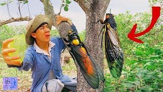 MẤT CẢ ĐỜI CON TRAI Khi Đang Đi Bắt Ve Sầu Trong Rừng .Suýt Chết Thảm Vì Tai Nạn Nghề Nghiệp
