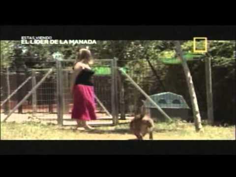 Segundo Episodio - EL LIDER DE LA MANADA 2da TEMPORADA 2013 - ROSIE