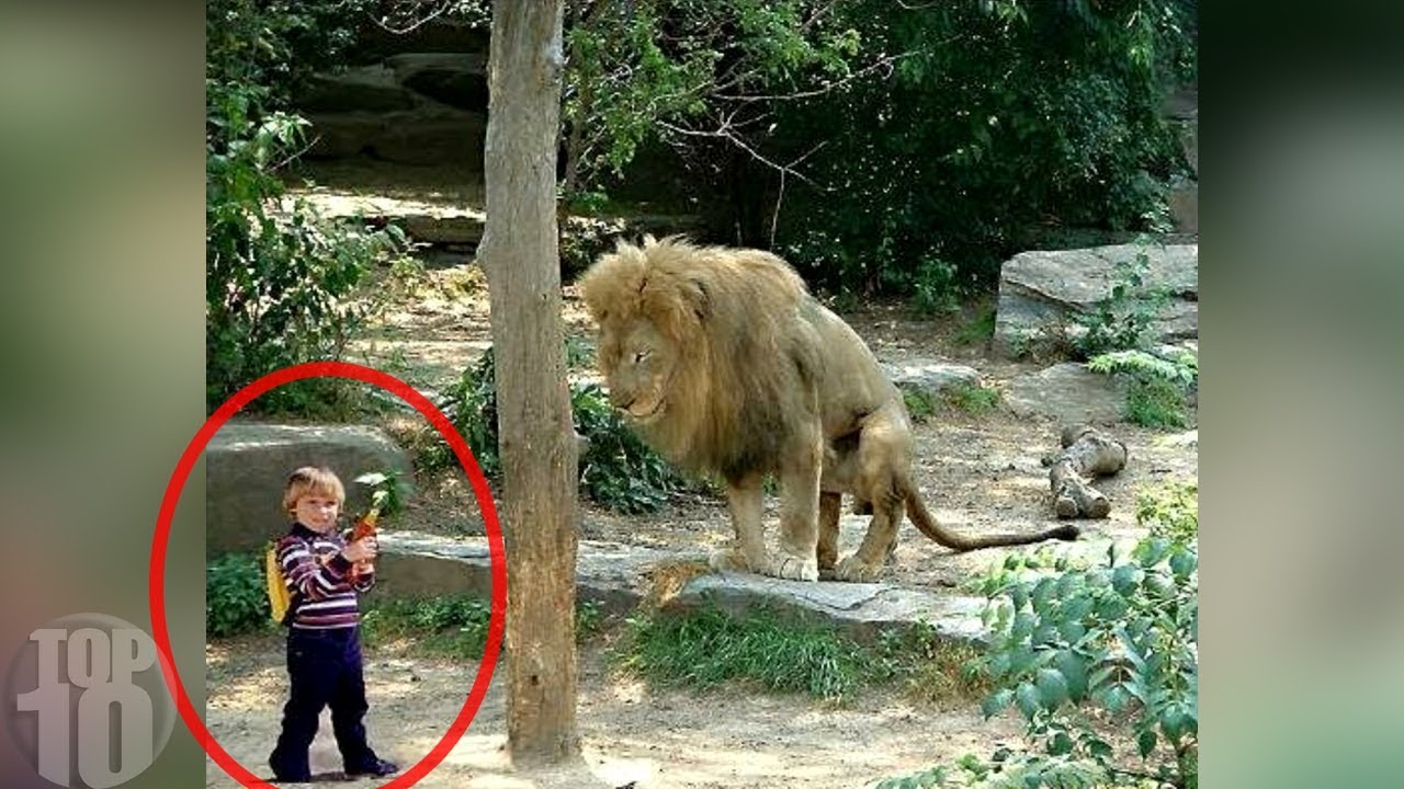 Terrified animal