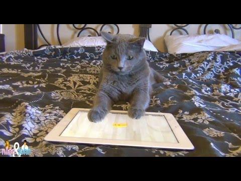 Cat plays Ipad