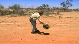 The emu runs faster that a kangaroo can bound