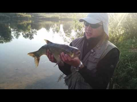 рыбалка на реке медведица волгоградской области видео