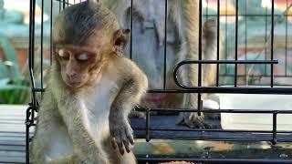 Million Cry Lori & Amari Lost conscious and not recognize her baby  Lori Still convulsion.