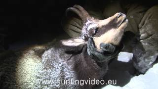 Chamois Hunting In The Austrian Alps (HD)