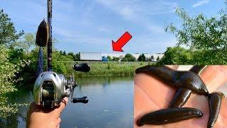 Fishing a HIDDEN Roadside Pond!!! (BIG FISH, PARASITES & LEECHES)