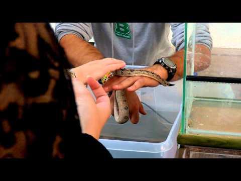 FIERA ANIMALI PN 25.09.2011 137.MP4