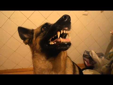 Как меняется настроение у собаки ) Приколы, юмор,23.03.2014 март