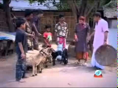 Bangladeshi Koutuk Harun Kisinzar video