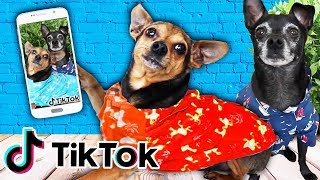 Our DOGS FIRST TIME Making Tik Tok Videos w/ Trending Tiktok Hashtags! (Adorable Pets) | PawZam Dogs