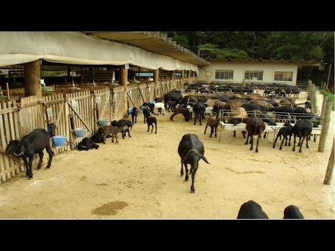Clique e veja o vídeo Curso Instalações para Ovinos