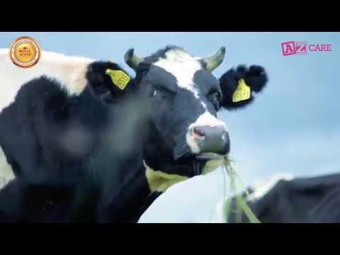 Cậu chuyện về những con bò Quý tộc của Sữa Hoàng Gia Úc