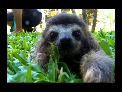 Watch Save Our Sloths