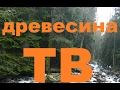 Wood Their Texture And Application Породы древесины их текстура и применение mp3