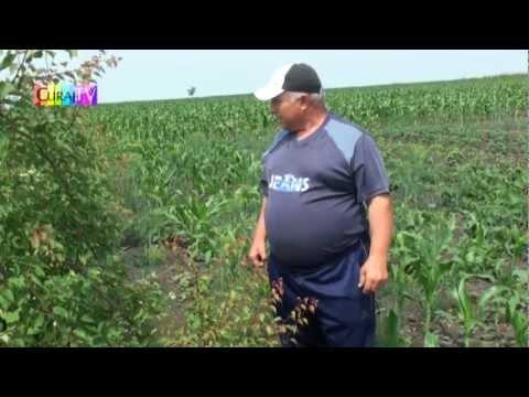 I-au distrus roada cu pesticide