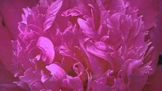 Denk An Mich (05-45 Marsch) (Musik Von Siegfried Zabransky)