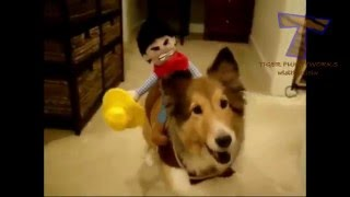Коты и собаки на Хеллоуин. Cats and dogs wearing Halloween costumes