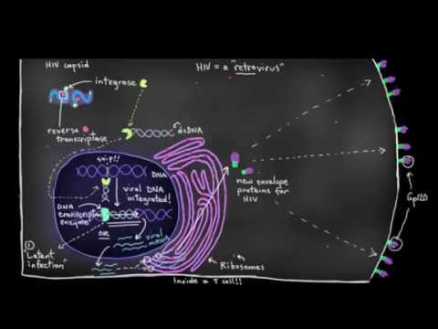 Khan Academy - How HIV infects us 2: CD4 (T helper) lymphocyte infection