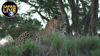 safariLIVE on SABC 3 - Episode 9