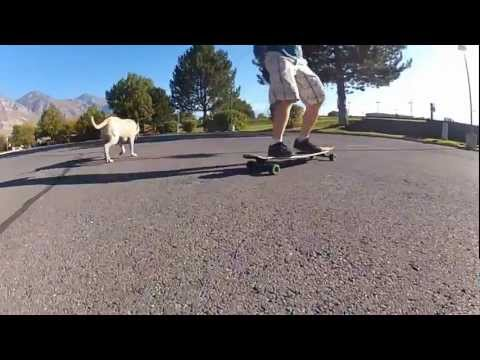 Longboarding with the Dog!
