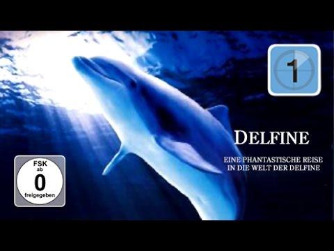 FilmDelfine - Eine fantastische Reise in die Welt der Delfine live Stream