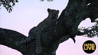 safariLIVE on SABC 3 - Episode 8