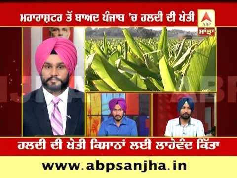 ABP SANJHA AGRICULTURE SPECIAL: Turmeric cultivation: Boon for Punjab farmers
