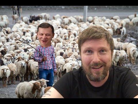 Пастух круторогих баранов