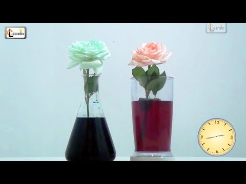 Colored flowers Color changing flower experiment Science experiments