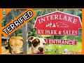 Our Dogs Were Terrified -- Interlake Campground Review -- Hudson Valley, NY