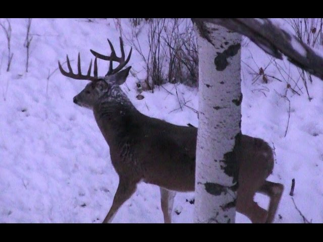 The most AMAZING Deer Hunting Video EVER!!! HD