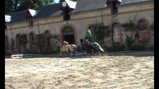 tao horse show  Bons Baisers de Galway   spectacle