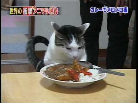 curry neko