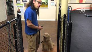 How To Thresholds Waiting at Door DIY Dog Training