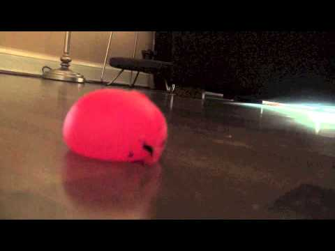 Slow Motion Angry birds jelly