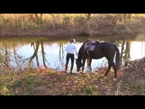 Un cheval ne veut pas aller à l'eau, jusqu'à ce qu'il essaie