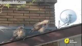 [ Video hài ]-Con chim khốn nạn nhất năm :v