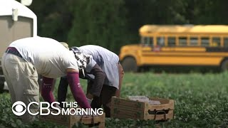 U.S. farmers struggle with coronavirus' effect on labor