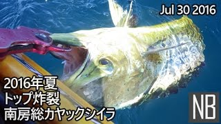 南房総・カヤック シイラ[Catching Dolphin Fish on a kayak in Minami-Boso] Jul 30 2016