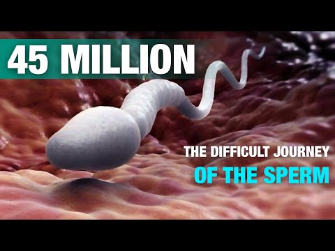 The difficult journey of the sperm | Signs thumbnail