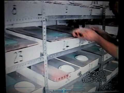 Creacion de una granja de caracoles(Helix Aspersa) Caspe  -1