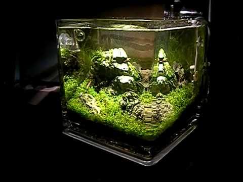 Tropica Aquacube Planted Nano Aquarium Iwagumi Style