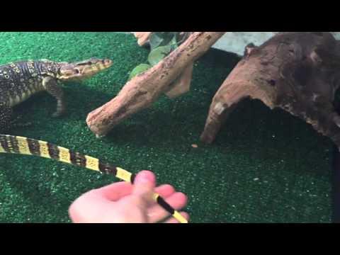 New cages + lizards & their setups