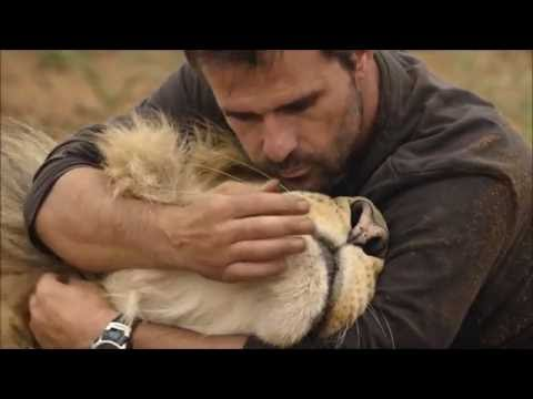 Kevin Richardson in Big Cats An Amazing Animal Family
