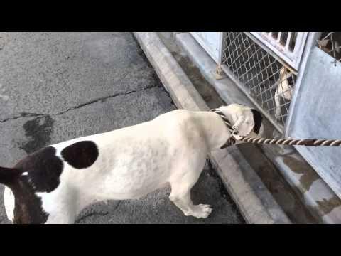 A4734641 Bp - Katrina's Kennel Walk video