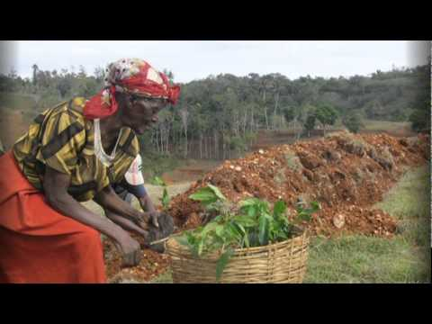 Plant With Purpose-Haiti Post-Earthquake
