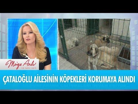 Çataloğlu ailesinin köpekleri koruma altına alındı! - Müge Anlı İle Tatlı Sert 21 Aralık 2017